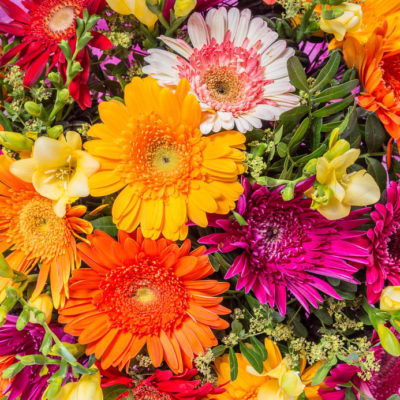 Brightly coloured geberas and freesias
